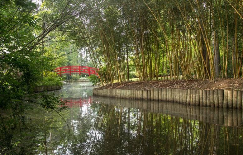 Asian Arboretum at Duke Gardens