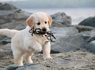 Karens puppy.jpg