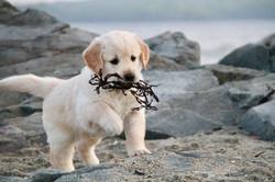 Karens puppy