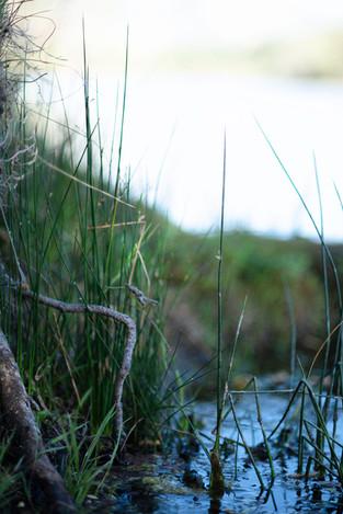 Sherry Lynn Loeser, River's Edge