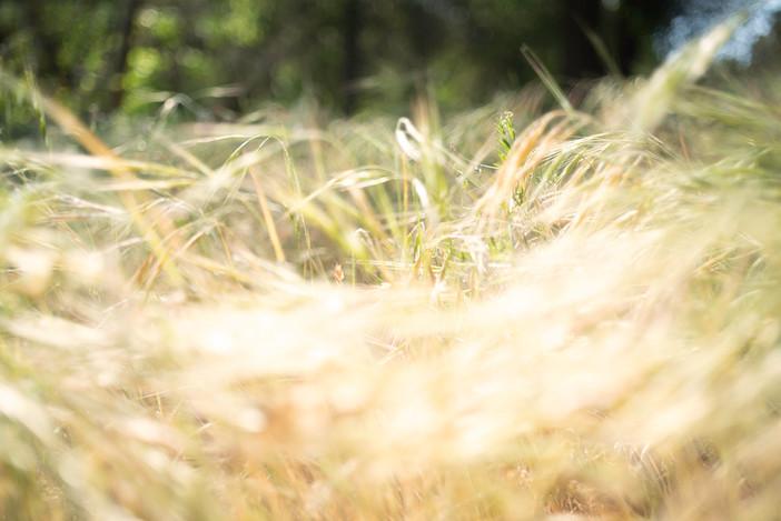 Sherry Lynn Loeser, Windy Sunshine