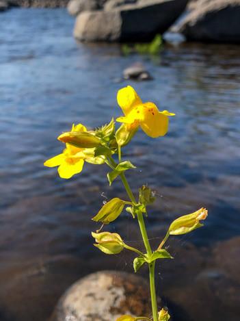 Christianna Schoitis, Spring Flower