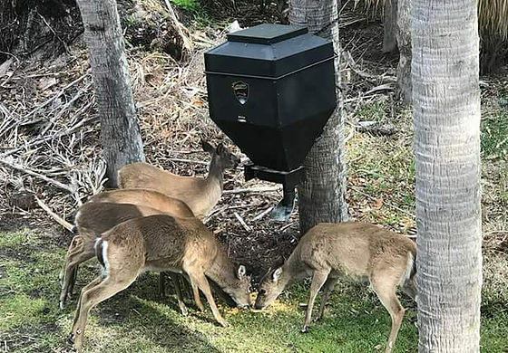 Deer on Douglas Manna feeder