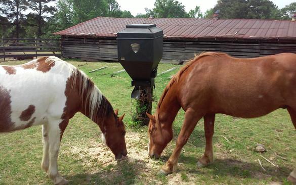 Horses on Douglas auger lower unit