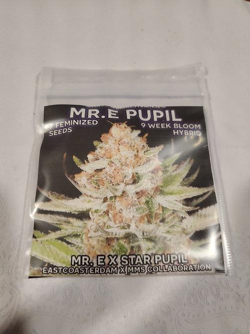 Mr E  Pupil
