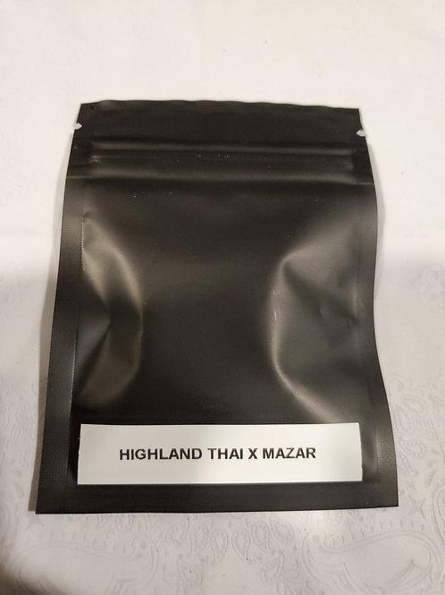 Highland Thai x Mazar