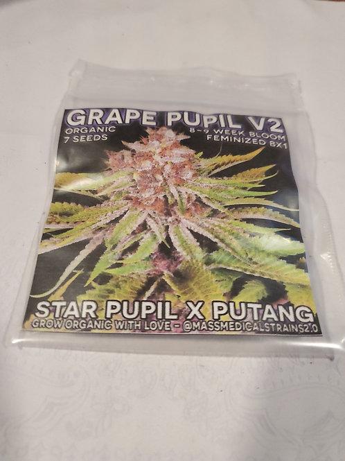 Grape Pupil V2