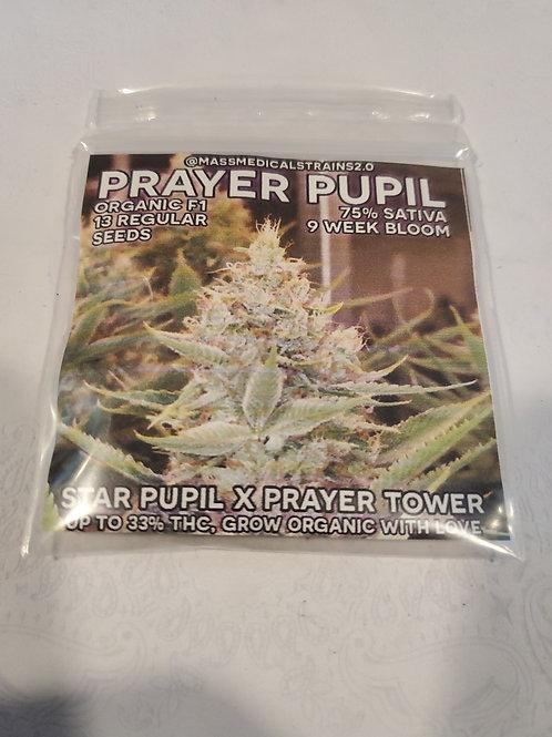 Prayer Pupil