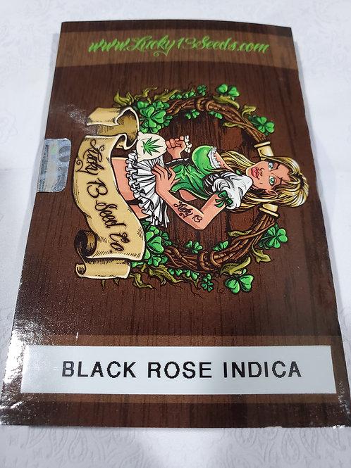 Black rose Indica + freebies