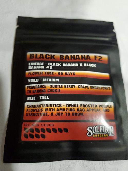 Black Bananas F2