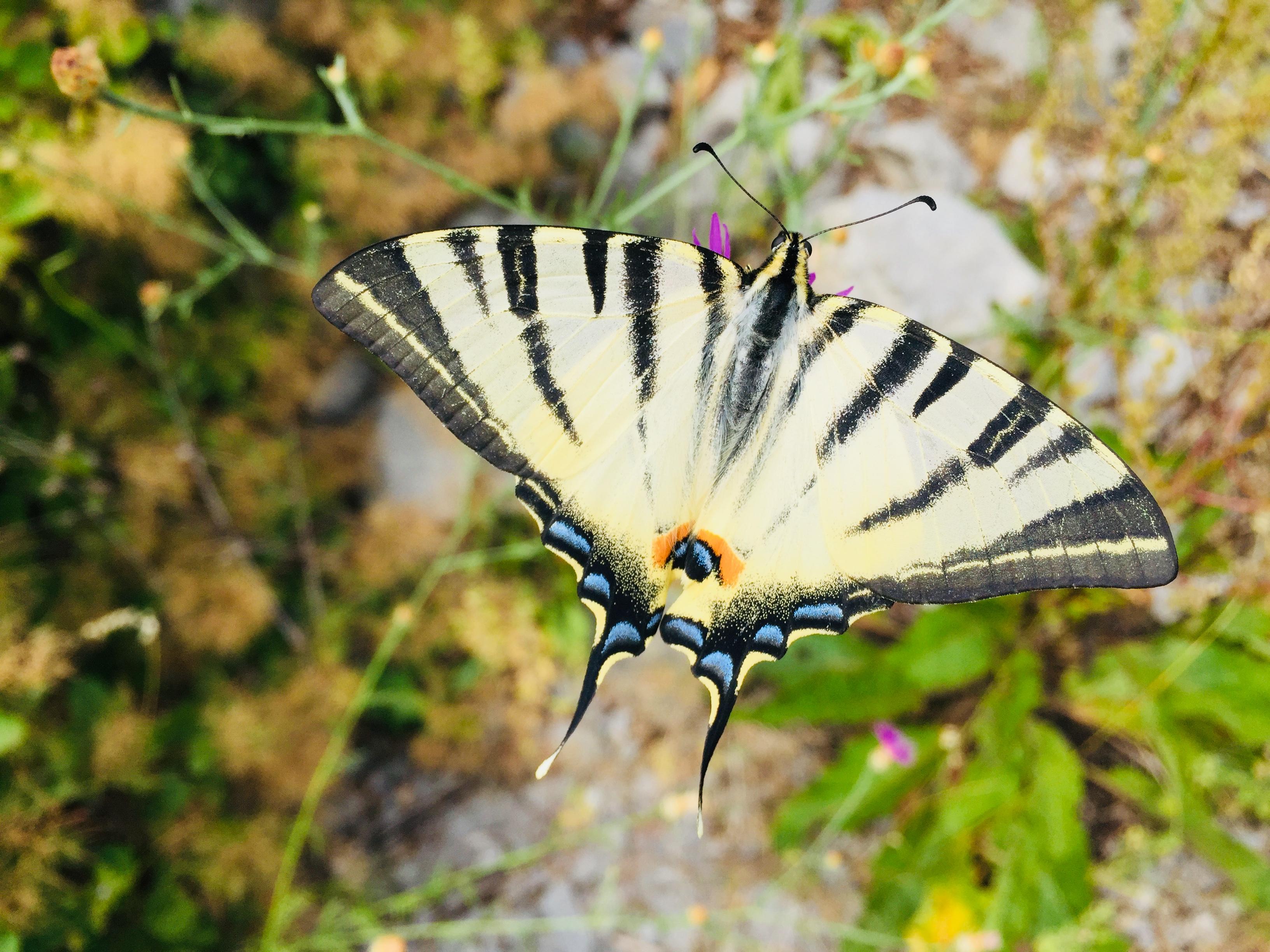 E29-3 Schmetterling