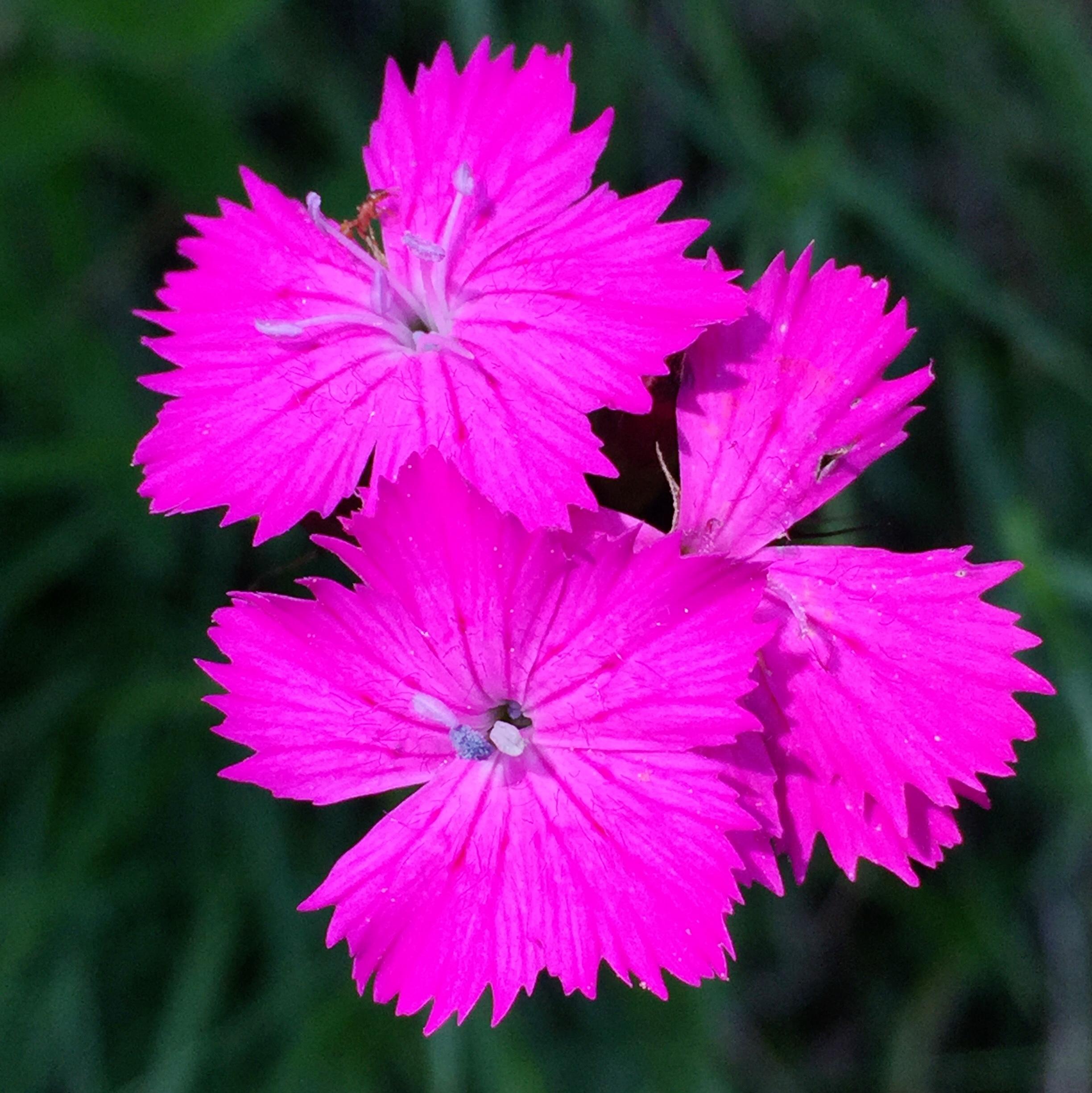 E10-2 Blumenpracht