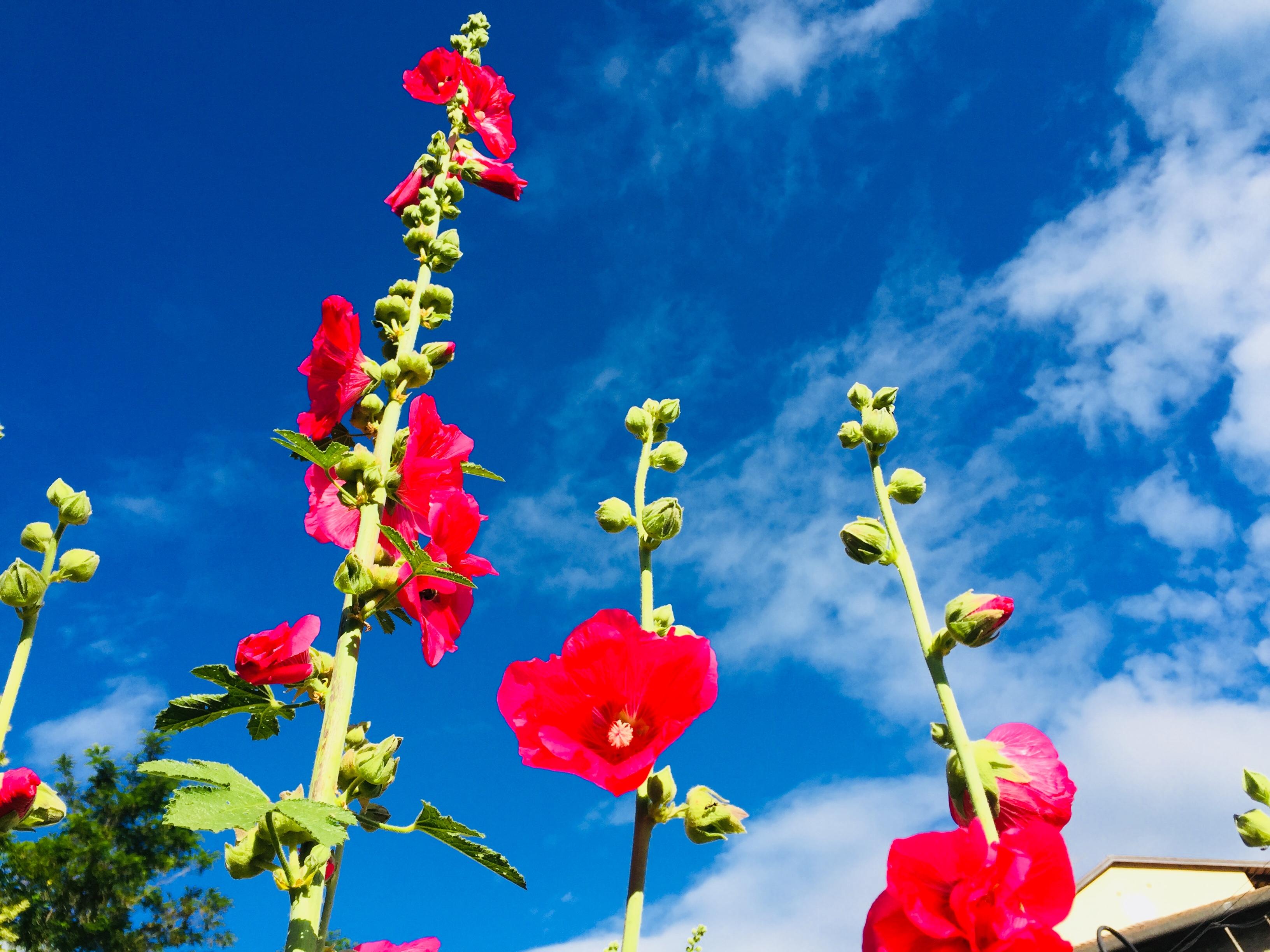 E27-1 Blumenpracht