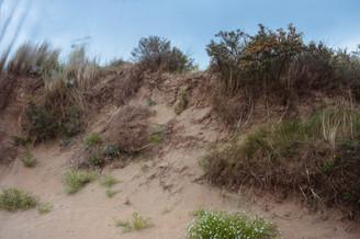 vue sur dune