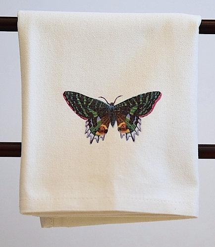 Butterfly Tropics