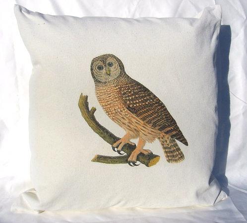 Curious Brown Owl