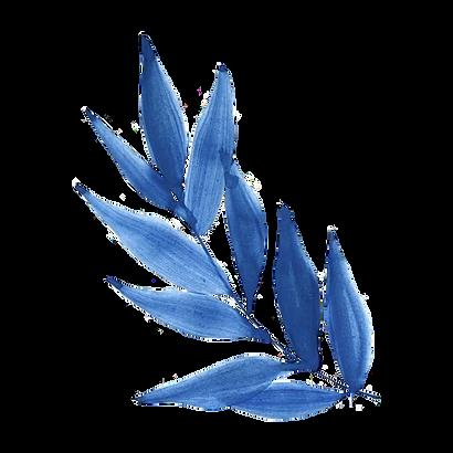 transparent-leaf-blue-plant-flower-peren