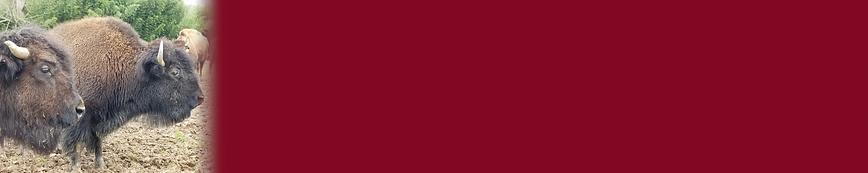 CTA-Bison-Strip-BIG_maroon.png