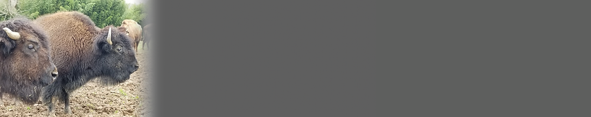 CTA-Bison-Strip-BIG_Gray.png