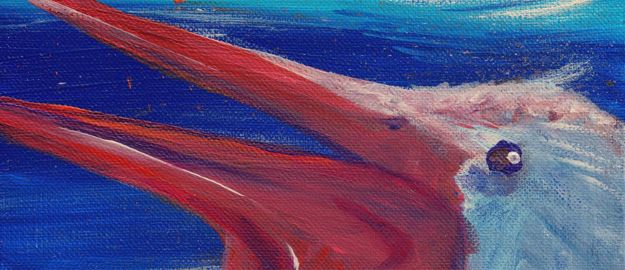Pelican Breeze