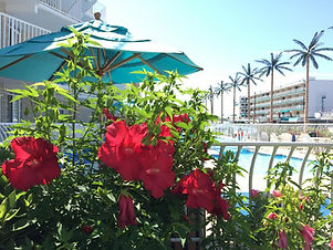 Picture of flowers by the pool.