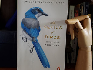 "Jennifer Ackerman's The Genius of Birds and ""Radical"" Ways of Reading and Learning"