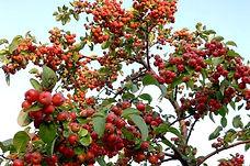 Frutales - Viveros Fuentidueña