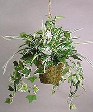 Planta de Interior - Viveros Fuentidueña