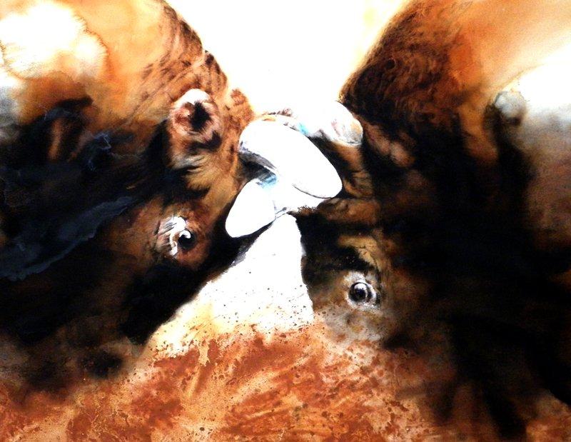 소싸움 황토혼합 116cm91cm 2012
