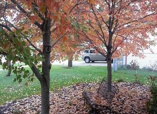 ABC's of Autumn Joy