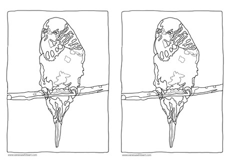 Budgie colouring in page - A4 print out
