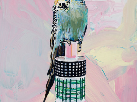 Exhibition: 'Perched! Jerry and Ettore's Budgerigars'