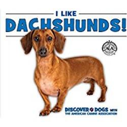 Dachshunds_