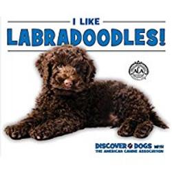 Labradoodles_