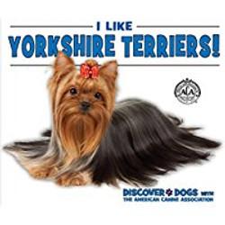 Yorkshire Terriers_