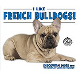 French Bull Dogs_