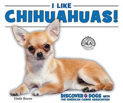 I Like Chihuahuas!