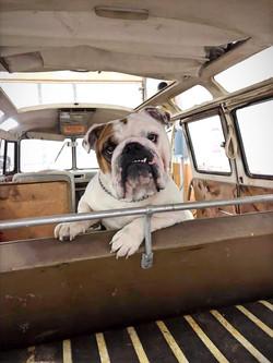 Henry J Dog