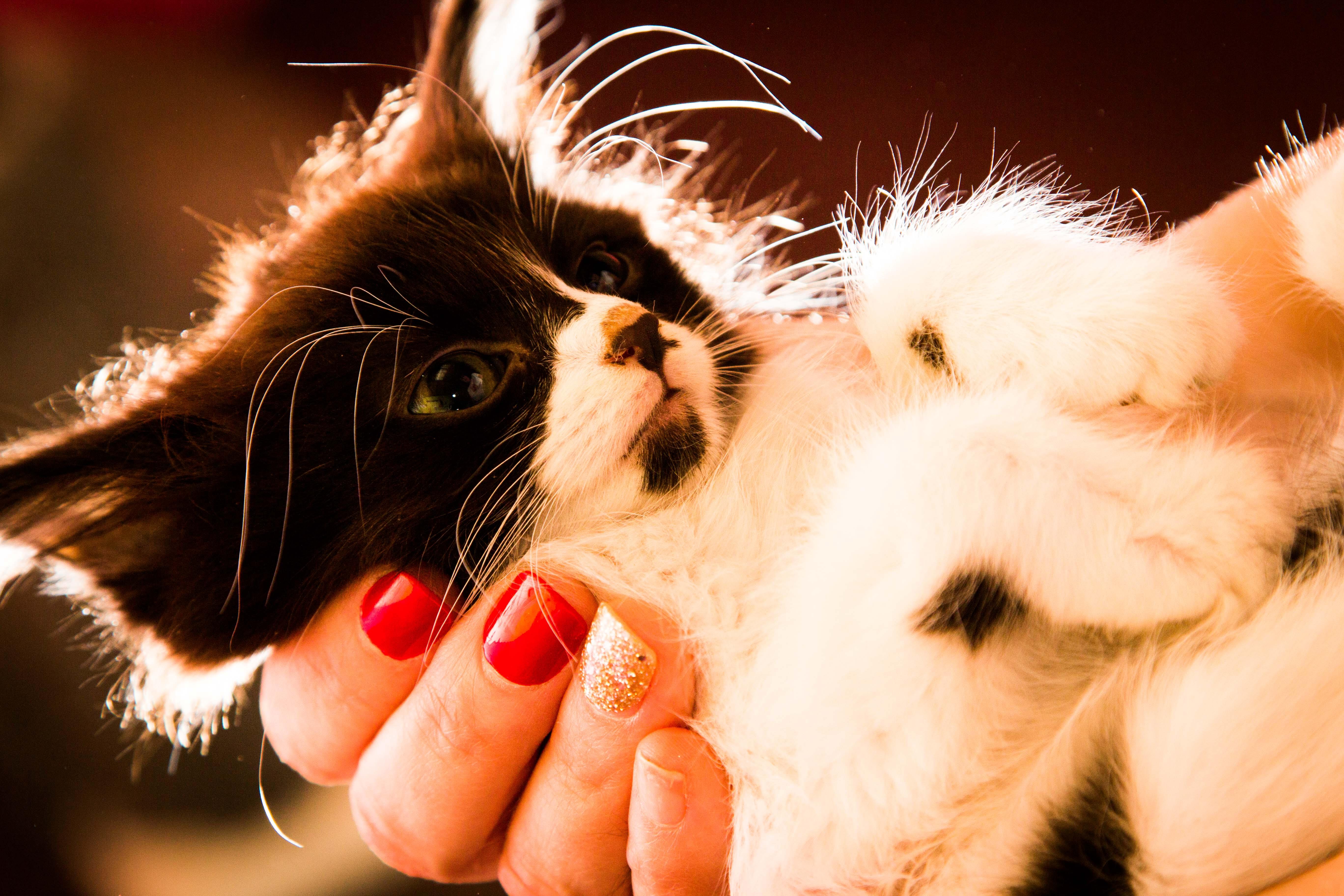 B&W Rescue Kitten
