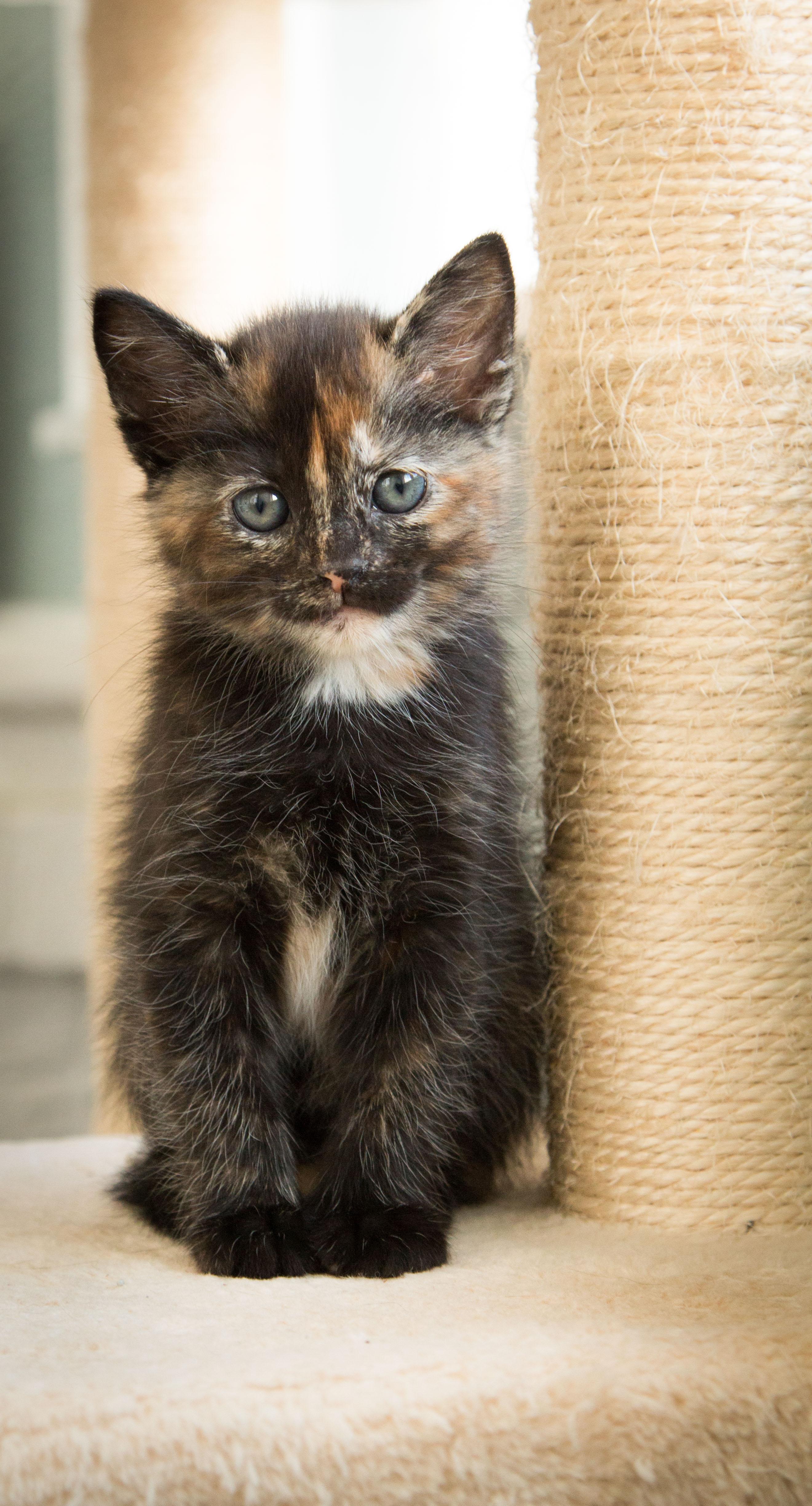Rescue Kitten