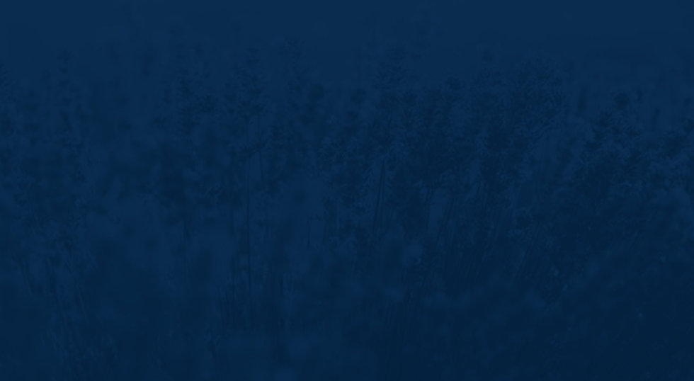 lilac-blue-duotone (1).jpg