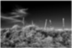 Clôture,nuage,herbes folles