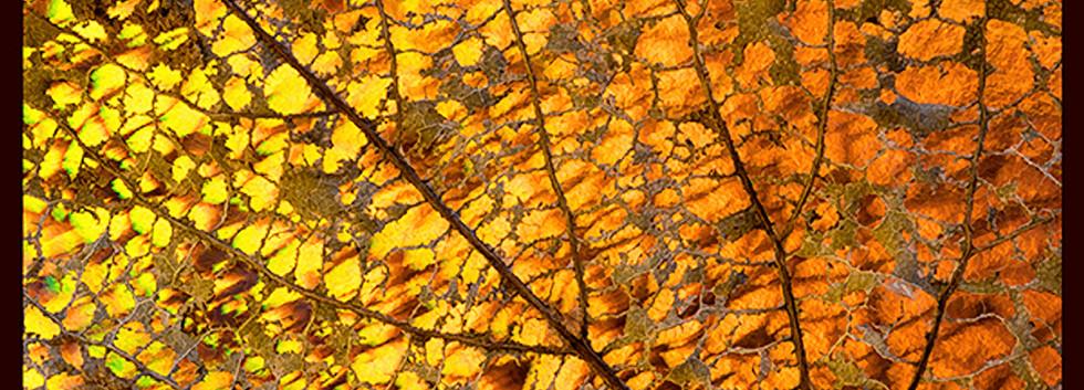Skeletal Leaf.jpg