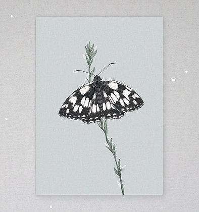 Postkarte | Schachbrettfalter - Schmetterling des Jahres 2019