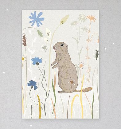 Postkarte | Ziesel