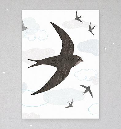 Postkarte | Mauersegler
