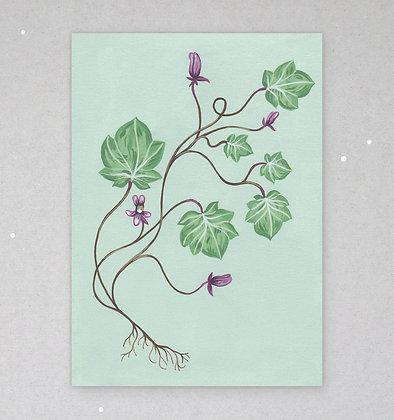 Postkarte | Zarte Flora - Cymbalaria