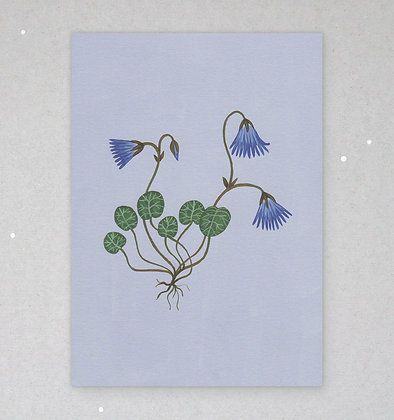 Postkarte | Zarte Flora - Soldanella