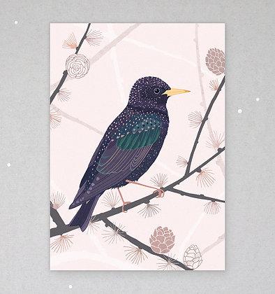 Postkarte | Star - Vogel des Jahres 2018