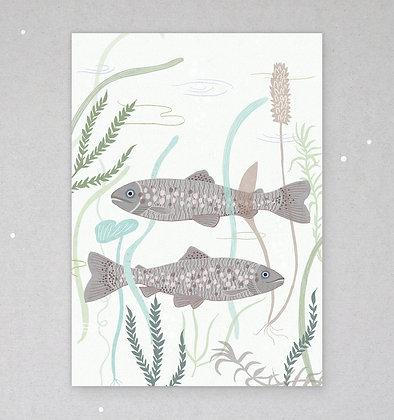 Postkarte | Bachforellen